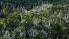 Pyjet zbusin efektet e ngrohjes globale